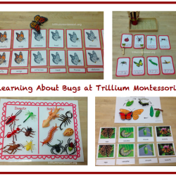 Learning About Bugs - montessoriinspirationathome.com